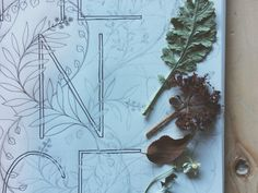 Botanical Inklings--the coloring book for watercolors and other wet mediums.  On Kickstarter until Nov. 30th.