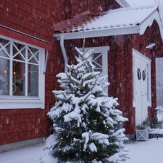 Snön föll; julgran; advent; xmas; timmerhus, Forsgrens timmerhus; dalarna; jul; pardörr; julstämning, Let it snow, I'm dreaming of a white christmas, winter, winter wonderland, timberhouse, loghouse, dalarna, sweden