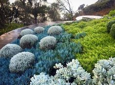 Inspiring Coastal garden designed by the extremely talented @nathanburkettdesign • #exoticnurseries #nathanburkettdesign #coastalgarden #gardendesign #landscapedesign #coastal #landscape #outdoors #succulents #boardwalk #design #landscapearchitecture #getoutdoors #gardenideas #gardeninspiration #coastal