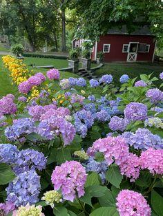 English Flower Garden, Hydrangea Garden, Flower Landscape, Landscaping, Outdoor Decor, Flowers, Artwork, Plants, Work Of Art