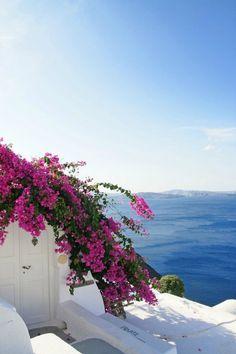 Greece, bougainvillea in bloom Santorini Grecia, Santorini Island, Mykonos, Bougainvillea, Beautiful World, Beautiful Places, Cap Vert, Greece Travel, Greek Islands