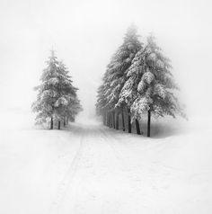 Un paisaje nevado con arboles #paisajes #nevada