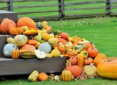 Pumpkins Photo by Christl H. — National Geographic Your Shot