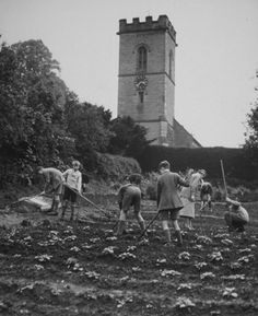 Schoolchildren receive a gardening lesson, circa 1944/45. The vegetables produced would have been used in the school canteen.