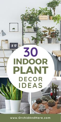 30 Houseplant Decor Ideas - Perfect for apartments, living rooms, bedrooms, kitchen and more! Get that gorgeous Farmhouse style with these pots and display ideas for your indoor plants. There's even some DIY project ideas too! Easy Plants To Grow, Growing Plants Indoors, Pothos Plant, Low Light Plants, Bathroom Plants, Plant Shelves, Display Shelves, Different Plants, Large Plants