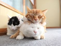The three musketeers! ; > )