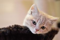 cool Cat Behavior Problems and how to tackle it effectively