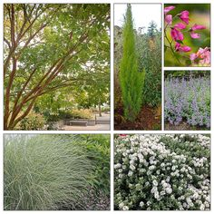 Drought-tolerant, Foliage First Plant Combo with Bountiful Blooms, Fabulous Foliage and Beautiful Bark   eGardenGo