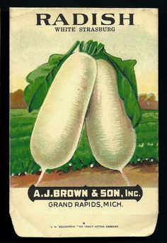 Seed packet from A. J. Brown & Son