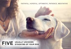Important Life Lessons To Learn From Dogs -