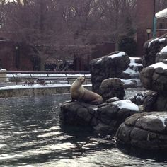 Sea Lions at the Prospect Park Zoo. Prospect Park Zoo, Sea Lions, Peaceful Places, York, Nature, Animals, Naturaleza, Animales, Animaux