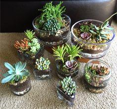 Terrariums I made today!