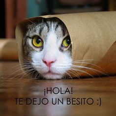Mejores 119 Imagenes De Frases Con Gatos En Pinterest Fluffy