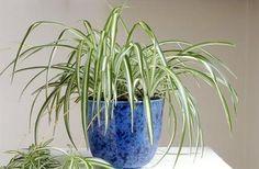 Plantas de interior 3