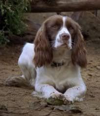 Useless, in Monarch of the Glen...hence my dog's nickname