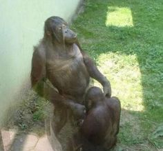 Took My Kids To Zoo and There We Seen Monkey That Were Having Fun Playing With Each Other  ---- funny pictures hilarious jokes meme humor walmart fails