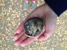 il piccolo scoiattolo congelato trova rifugio con due cani.