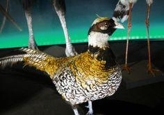 5.1 megapixels: Museo Argentino de ciencias naturales Bernardino Rivadavia (Bs.As.) oct 2012 - Foto: @Isaias Garde