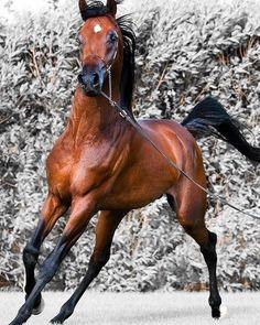 ✅ Double tap the pic  ✅ Tag your friends    #horses #horse #horseshow #horseshoe #horsesofinstagram  #horselove #horseshoebend #horselover #horserider #horseofinstagram