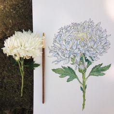 Art And Illustration, Landscape Illustration, Plant Drawing, Painting & Drawing, Drawing Flowers, Flower Drawings, Botanical Art, Art Inspo, Watercolor Art