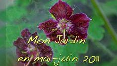 """Le tour de mon jardin dans le Loiret en pleine floraison en mai - juin où couleurs, senteurs, saveurs se conjuguent pour le plaisir de tous nos sens. Une vidéo à partager avec tous les amoureux de beaux jardins.Citation : """"Que m'importent les tulipes et les roses, puisque, par la pitié du Ciel, j'ai pour moi seul, tout le jardin"""" … (Chams al-Din Muhammad Hafiz - Poète persan (1320-1389) Les Ghazels)."""