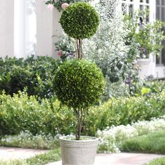 I M Thinking About Fake Topiaries For The Front Porch Since I Always Forget To Water Whatever I