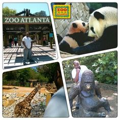 Zoo Atlanta has partnered with the Atlanta Checker Cab Company to offer free cab rides from select downtown hotels to the Zoo (and from the Zoo back to the hotels). Learn More Find Out How Much A Membership Can Save You!