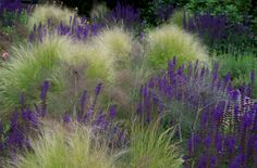 Salvia 'Mainacht' http://www.shootgardening.co.uk/plant/salvia-x-sylvestris-mainacht … and Stipa tenuissima http://www.shootgardening.co.uk/plant/stipa-tenuissima …