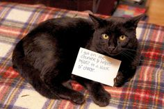 Cat-Shaming At Its Best - This one actually looks like it's holding the sign. :)
