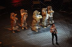 Mexico City Votes To Ban Animals in Circuses!