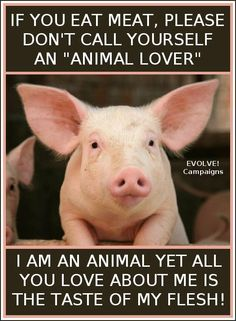 animal lover or hypocrite?