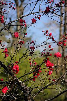 """Red Flowers"" #BonnieBlanton"