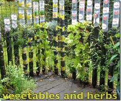 Vertical gardening in plastic bottles - this would be great for a little herb garden in a small space.  You could also easily move it inside during cold weather.