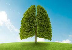 Alimentacion beneficiosa para los pulmones