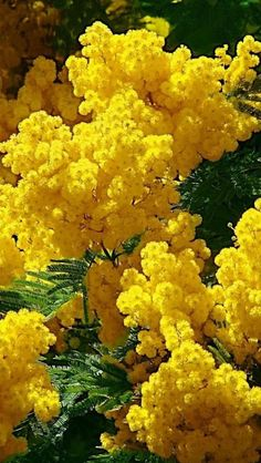 Flowers with meaning - Flores Exotic Flowers, Yellow Flowers, Beautiful Flowers, Yellow Plants, Flower Meanings, Gras, Flowering Trees, Native Plants, Beautiful Gardens