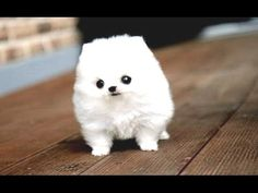 Funny Puppies And Cute Puppy Videos Compilation 2016 [BEST OF] - http://funnypetvideos.net/funny-puppies-and-cute-puppy-videos-compilation-2016-best-of/