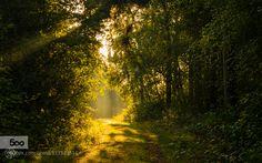 Shower Of Light (Netherlands) by williammevissen