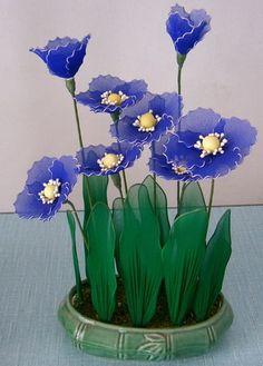 Silk Stocking Flower