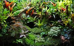 Tropical palaudarium with Tillandsia, Orchids and tropical mosses. Suitable for keeping tropical Gecko's and dartgrogs