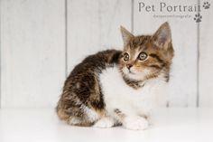 Kattenfotograaf Hillegom - Kitten Tommy-7