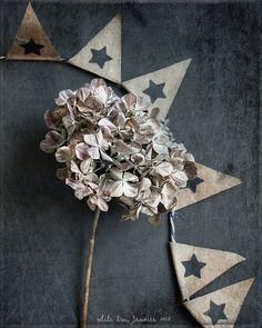 hydrangea |by odile lm