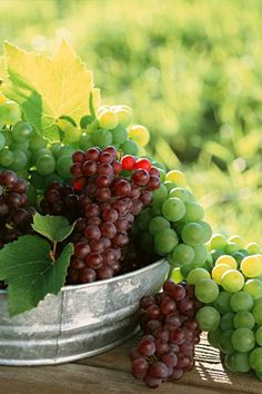 Grapes in vineyard, Abundant Harvest of Fruit - Fruit Photography - Fresh Grape Clusters Photos 1 Grape Wallpaper, Hd Wallpaper, Fruit Photography, Growing Grapes, In Vino Veritas, Fruits And Vegetables, Fresh Fruit, Grape Vines, Wines