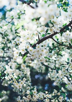 Blossom by Call me cupcake, via Flickr