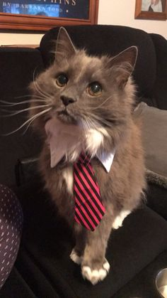 My cat decided to run for President. I think he's a clear winner. http://ift.tt/2qORb1K