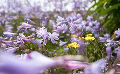 our garden #photography #fujifilmxt2 #flowers #garden