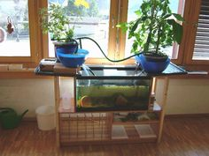 Aquaponic systems are awesome! Raise fish & grow plants (we've had many many bowls of salads using this kind of system!) Give it a try! :)