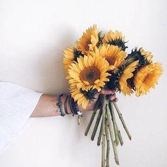Sunflowers garden flowers