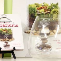 I pinned this 2 Piece Empty Terrarium and Do-It-Yourself Guide Set from the Twig Terrariums event at Joss and Main!$56.95