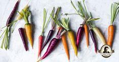Propriedades e indicações terapêuticas das cenouras