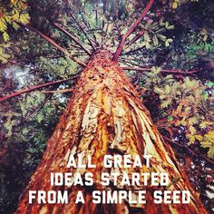 All great ideas started from a simple seed.